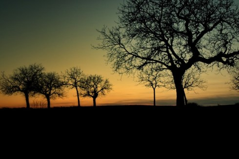 silhouettes arbres Talant
