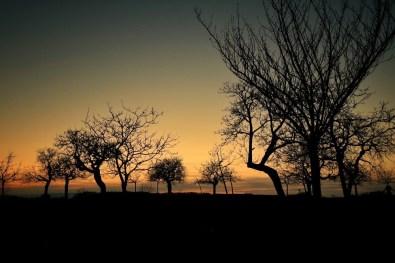 silhouettes arbres coucher de soleil Talant