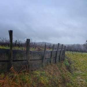 barrière bois et vigne Irancy Bourgogne