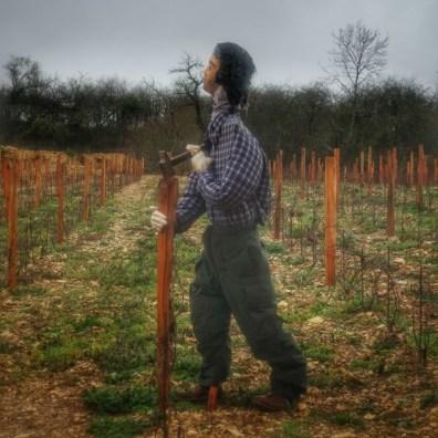 le planter de bâton Irancy
