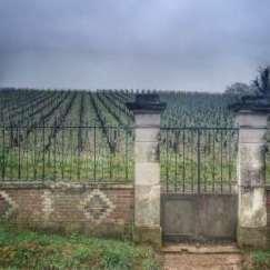 muret et porte sur vigne à Irancy, Bourgogne