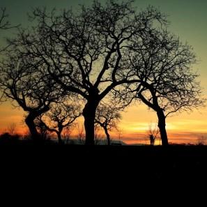 silhouettes arbres soleil couchant Talant