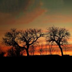 silhouette d'arbres au soleil couchant