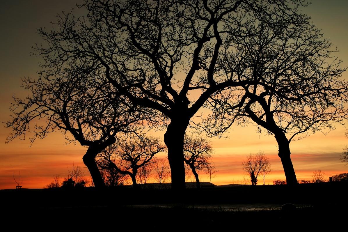 arbres dansant au coucher de soleil Talant
