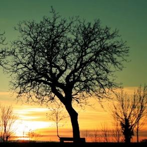 végétation coucher de soleil Talant