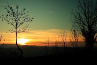 végétation au coucher de soleil Talant