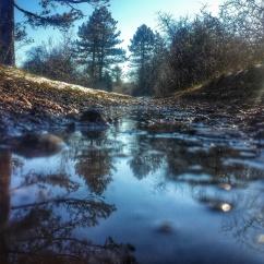Puddle le long du sentier de Baulme la Roche janvier