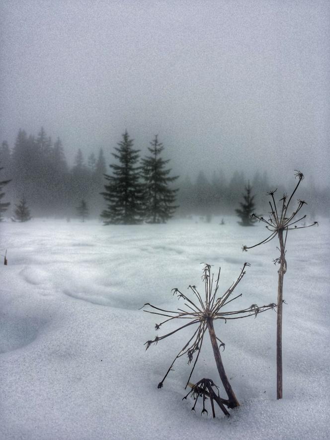 Détail nature sentier les baganiers, Bellefontaine