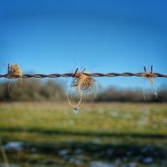 le long du sentier Baulme la Roche janvier