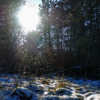 neige sur le sentier Baulme la Roche janvier