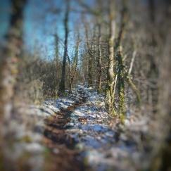 sentier Baulme la Roche janvier