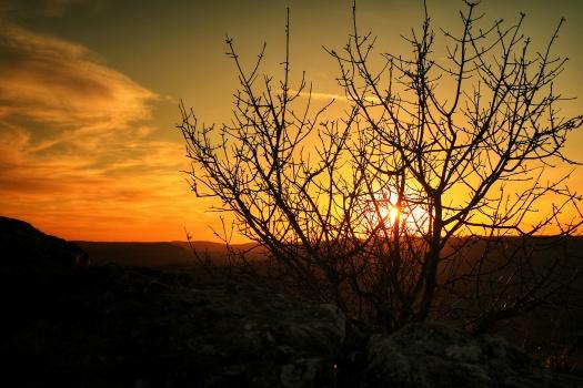 Silhouette d'arbre au coucher de soleil Baulme la Roche