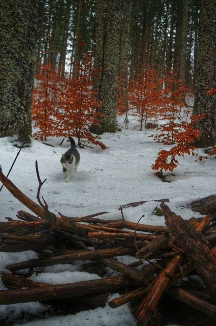 un chat guide, sentier les baganiers, Bellefontaine
