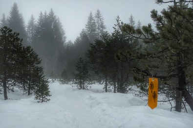 Le long du sentier les baganiers, Bellefontaine