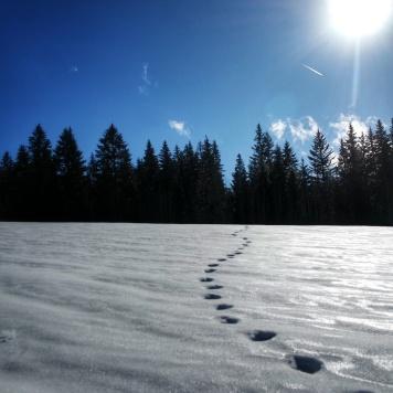 empreintes le longu du sentier les baganiers, Bellefontaine