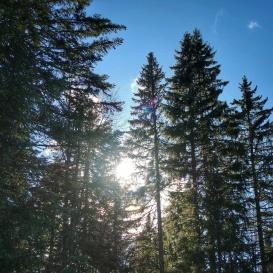 sentier les baganiers sous le soleil , Bellefontaine