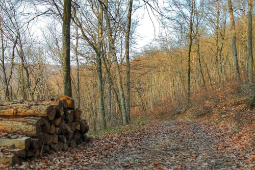 Sentier du Bouton d'Or, Val-Suzon Côte d'Or, Bourgogne