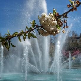 fleur devant bassin Place Wilson