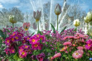fleurissement Place Wilson Dijon