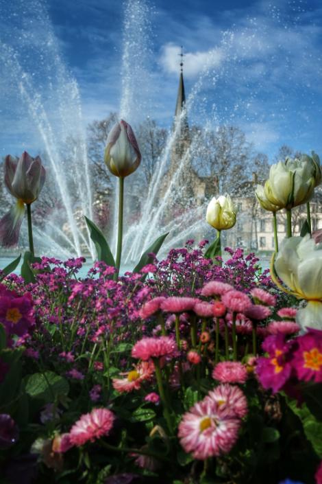 tulipes et jet place Wilson Dijon