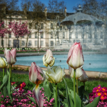 tulipes et kiosque place Wilson Dijon