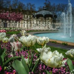 Tulipes jets kiosque Place Wilson Dijon