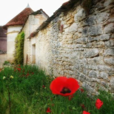 Coquelicots au domaine de FlavignyAlesia Bourgogne
