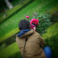 jolie pivoine dans les jardins du château de Bussy-Rabutin