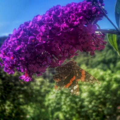 Papillon, Antheuil, Vallée de l'Ouche, Bourgogne