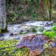 Feuille morte, le long du Bel Affreux et ses cascades de Tuf, Antheuil, Vallée de l'Ouche, Bourgogne