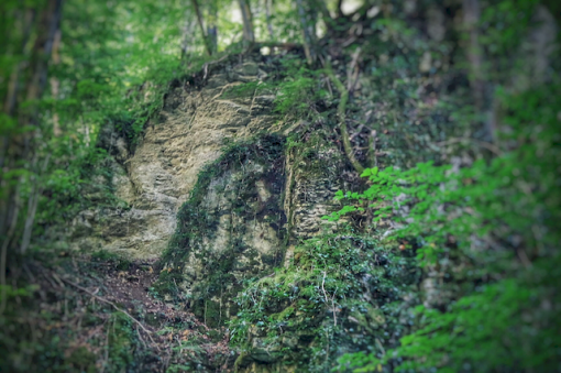 Pierre laissant apparaître un visage, le long du Bel Affreux et ses cascades de Tuf, Antheuil, Vallée de l'Ouche, Bourgogne