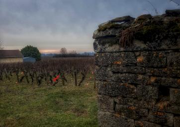 vignes dans le village de Mercurey