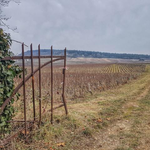 portes ouvertes sur les vignes, Mercurey, Bourgogne