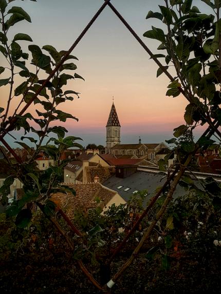 Toit végétalisé terrasse Cuverie Les Ursulines JC Boisset Nuits-saint-Georges, Bourgogne
